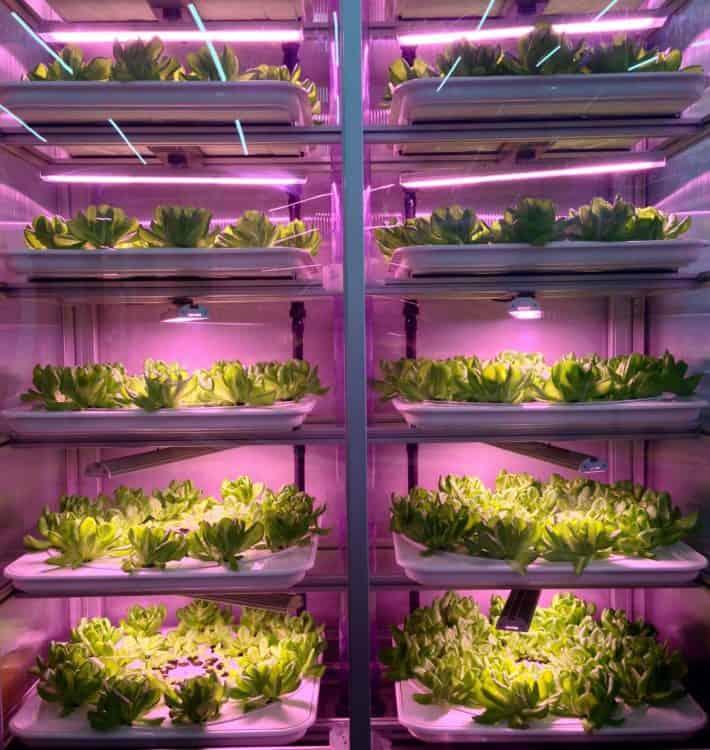 Glaskasten Good Bank Salatanbau pinkes Licht