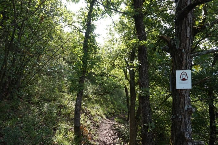 Hildegard von Bingen Pilgerwanderweg, Wegführung durch den Wald, Wegweiser am rechten Baumstamm