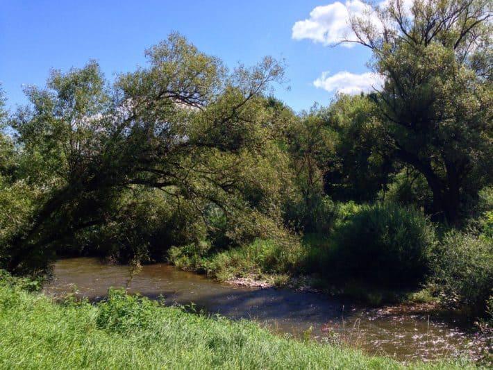 Hildegard von Bingen Pilgerwanderweg, 4. Etappe, am Fluß lang, Nahe, grün, Gras, Bäume, blauer Himmel