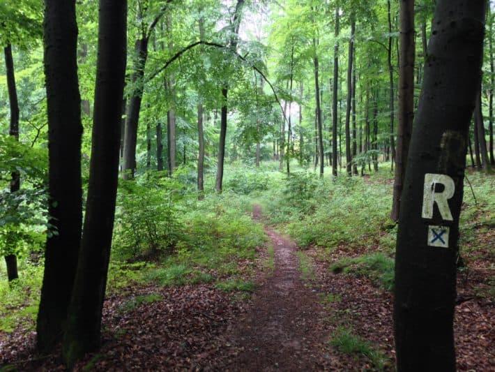 Pummpälzweg, Markierung Rennsteig, Wald, Bäume Natur