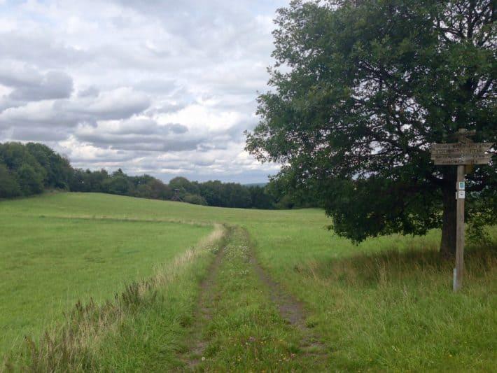 1. Tag Hildegard von Bingen Pilgerwanderweg, Wiesenweg, Gras, grün, Natur