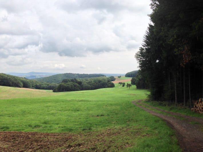 2. Etappe Hildegard von Bingen Pilgerwanderweg, Waldweg, Waldrand, Wiese, Hügel, Natur, bewölkter Himmel