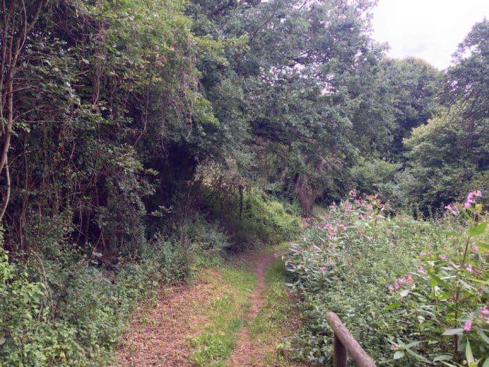Auf dem Weg nach Monzingen auf dem Pilgerwanderweg, Natur, Grün, Bäume, Sträucher
