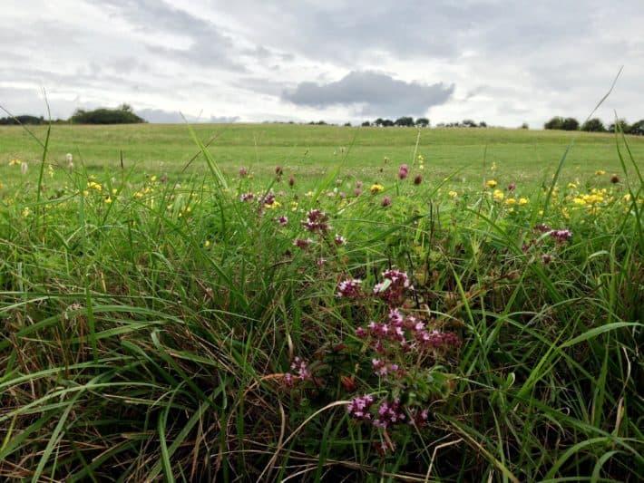 3.Etappe Hildegard von Bingen Pilgerwanderweg, Wiese, Wiesenblumen, Natur, grün, bunt, schön
