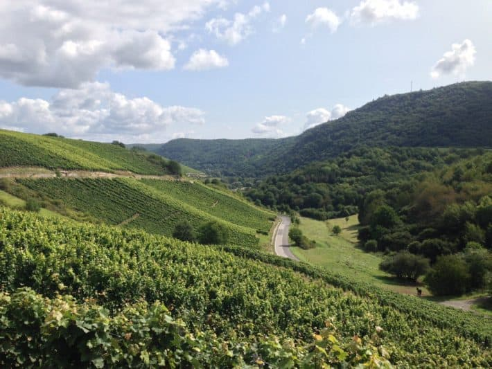 Durch die Weinberge gelange ich nach Oberhausen auf dem Pilgerwanderweg