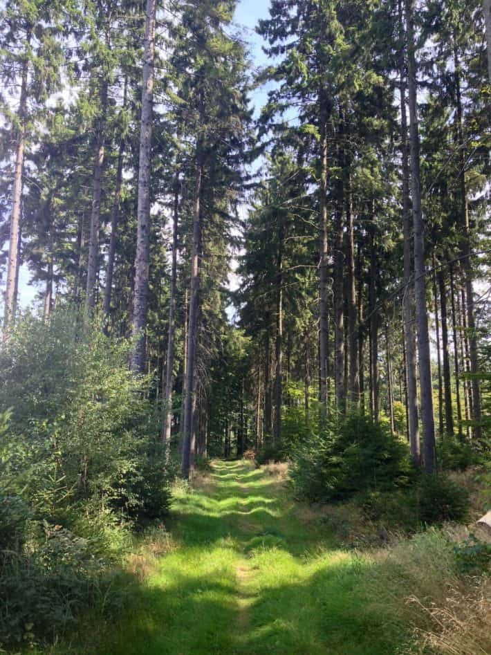 Herrlicher Waldweg,7. Etappe Pilgerwanderweg