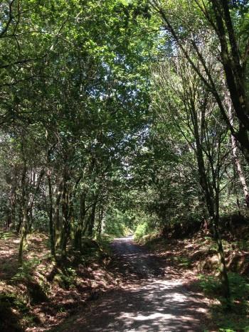 schöner, schattiger Waldweg nach Negreiro, Jakobsweg
