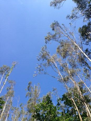 tolles Wetter, blauer Himmel, Jakobsweg