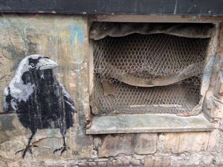 Streetart Juli 2017, Krähe, vergittertes Kellerfenster, braun, schwarz