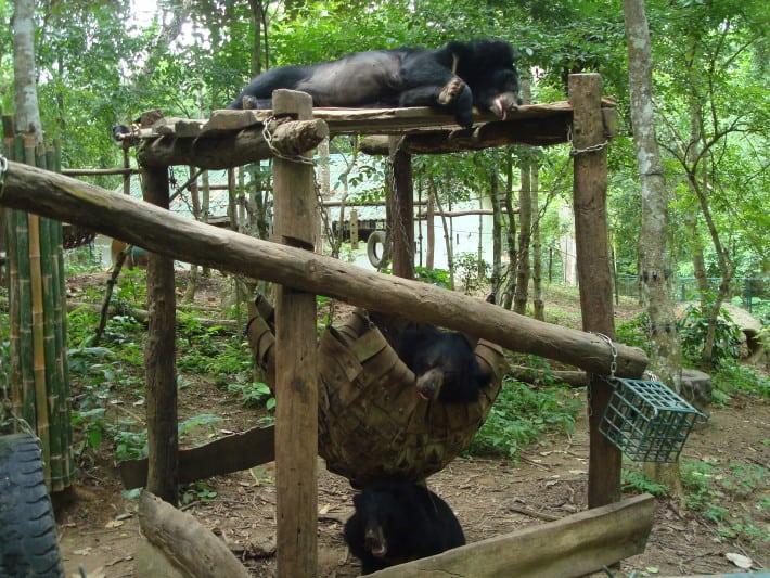 Bären am Wasserfall Laos
