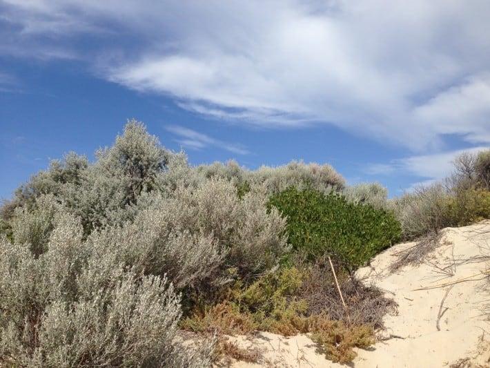 Strand Westaustralien