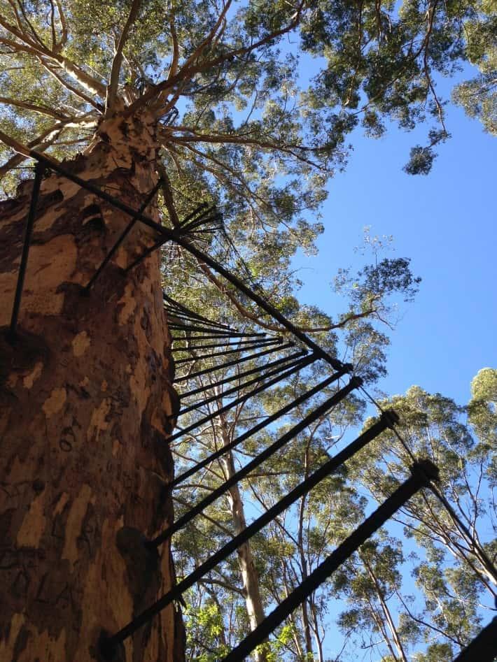 Treppenstufen im GLoucester Tree