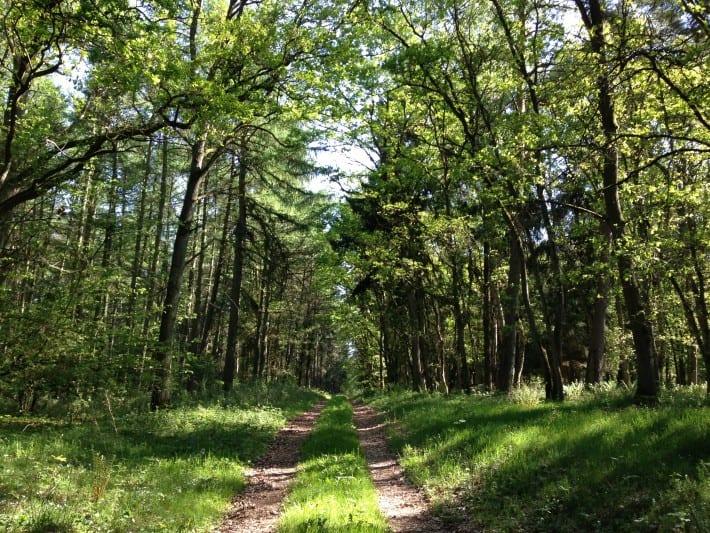 Waldweg nach Pinnow