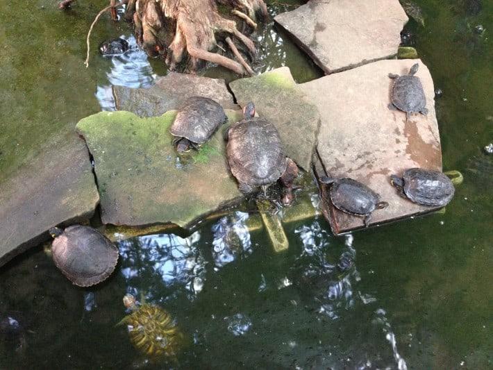 Schildkröten im Atocha Bahnhof Madrid
