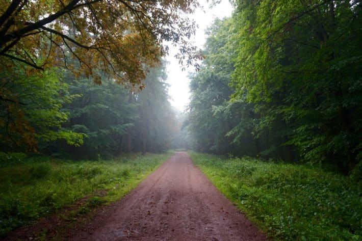 Pummpälzweg, Morgennebel auf dem Wanderweg