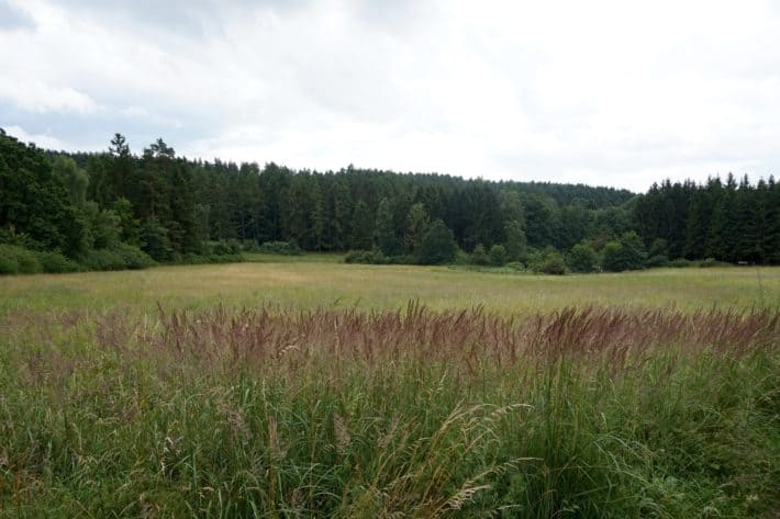 Pummpälzweg, Frankensiedlung vor etwa 1100 Jahren, Große Freifläche