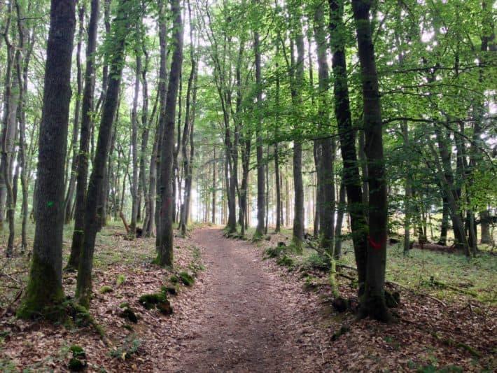 2. Etappe Hildegard von Bingen Pilgerwanderweg, durch den Wald, hinter Herrstein, Waldboden, Bäume, Natur