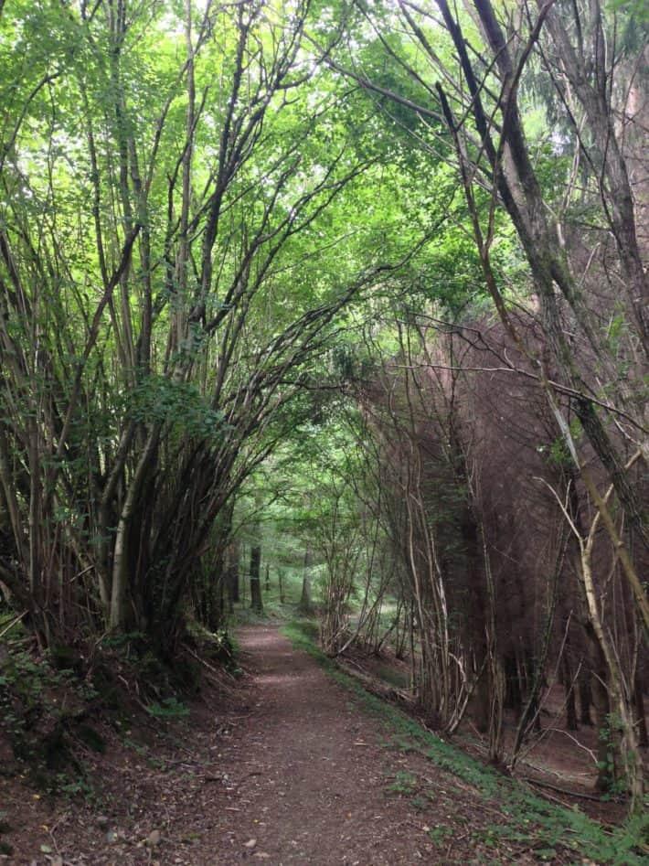 3. Etappe Pilgerwanderweg, wundervoller Waldweg, Blatterkathedrale, grün, Natur, schön