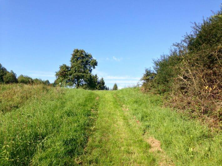 Pilgerwanderweg, Wiese, Gras, Trampelpfad, blauer Himmel