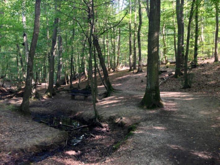 Steckeschlääfer Klamm, Hildegard von Bingen Pilgerwanderweg, schön, Wald, Flüsschen, Brücken, Holzschnitzereien