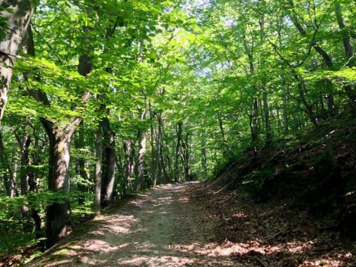 Hildegard von Bingen Pilgerwanderweg auf dem Rheinhöhenweg