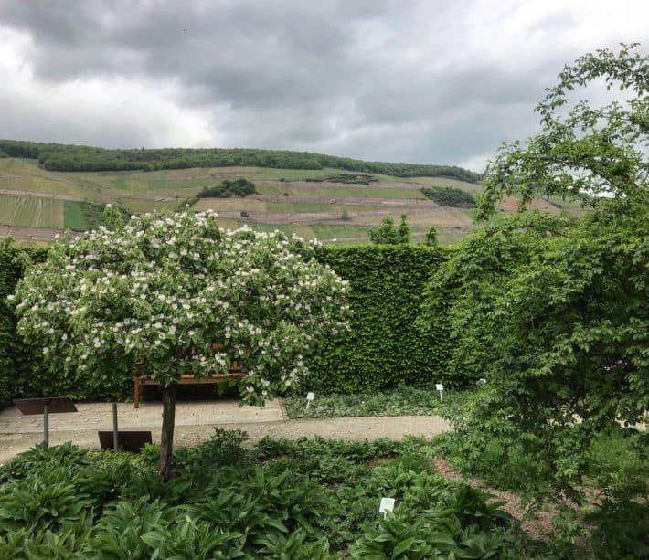 Kräutergarten, Hildegarten, Hildegard von bingen, Binger Hildegardweg