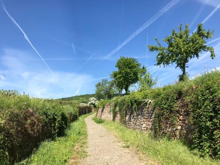 Rüdesheimer Hildegardweg, Weg, blauer Himmel, Mauer, Weinberge
