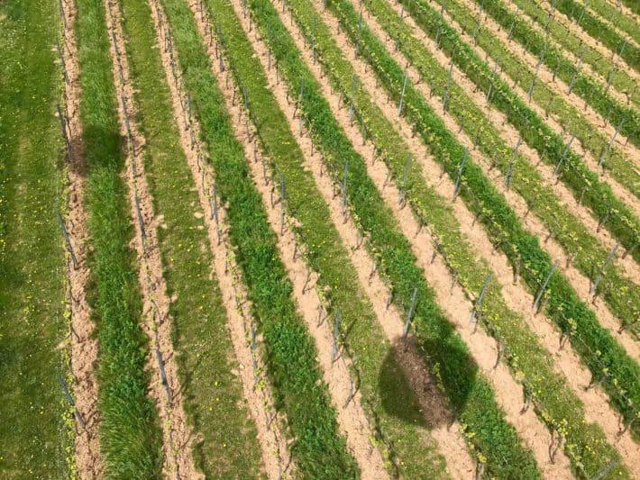 Weinberge, Schatten von Seilbahngondeln, Grün, Natur