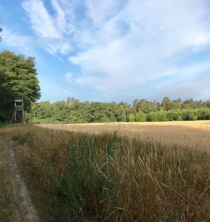 Wald, Wiese, Wanderpfad, Via Imperii 3. Etappe