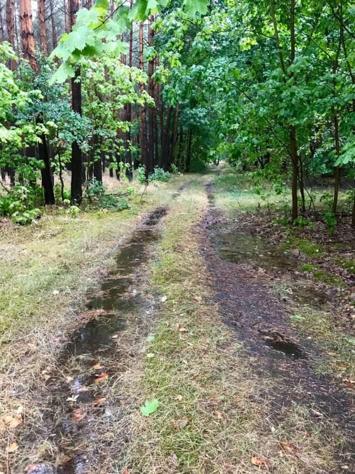 matschiger Waldweg, Pfützen, Wald, grün, 4. Etappe der Via Imperii