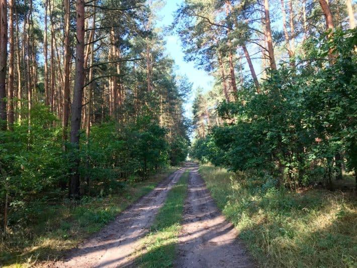 5. Etappe der Via Imperii, Brandenburg, Wanderweg, Wald, Waldweg