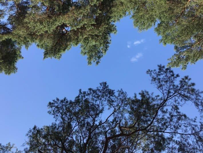 Blauer Himel, Baumkronen, 5. Etappe der Via Imperii, Brandenburg